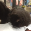 Adopt A Pet: Precious and Rose need a home
