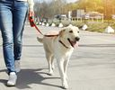 Keep your family pet active, happy with orthotics