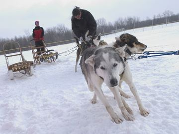 Cannington Dog Sled Races and Winterfest
