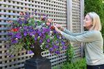 Celebrating 10 years of stunning gardens