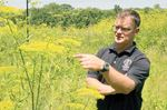 Potentially harmful species cropping up in Barrie, Simcoe County