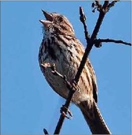 Why Chipmunks make the birds sing more– Image 1