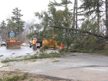 Crews from Hydro One tended to a downed tree on Mount Wolfe Road.