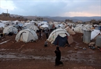 Canada urged to join record Syria aid drive-Image1