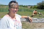 Mini horse farm in Adjala welcomes visitors