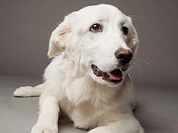 Midland OSPCA dogged in determination to help animals