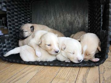 Puppies found in garbage bag in Midland ditch