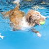 Hydrotherapy for any dog is an option worth floating
