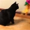 Adopt A Pet: Vinnie needs a home