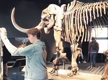 Mammoths and Mastodons-Titans of the Ice Age