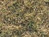 Drought Protection Tips for Lawns
