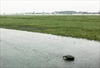 Kennedy airport takeoffs disrupted by turtles' mating ritual-Image1