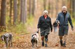 Durham Regional Forest dog walkers