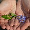 Sustainable garden at White Oaks