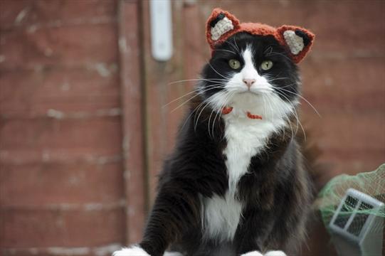 Feline Fox