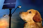 Doggie Lights