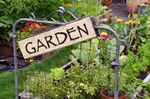 Ten easy tips for having a great vegetable garden this summer