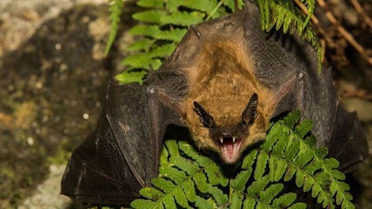Rabid bat found in Port Perry