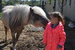 Flamborough horse rescue open house
