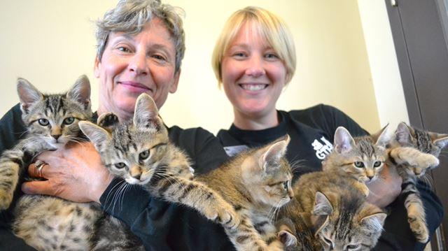 Collingwood Humane Society Cats