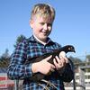 Conor's chickens