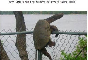Turtle on fence