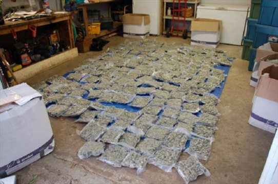 Arrest Made In 1 Million Drug Bust In Wellington County