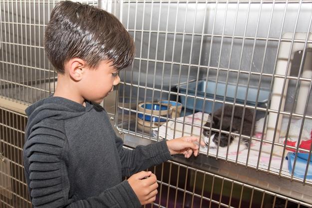 Brampton Animal Shelter Adopt A Cat