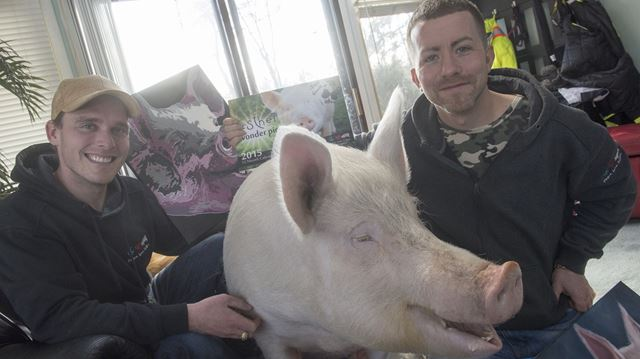 Esther the Wonder Pig settles into home at Campbellville sanctuary