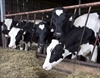 Canadian dairy could face Trump challenge-Image1