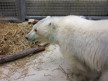 Assiniboine park zoo discount coupons