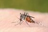 "Canadians should ""definitely"" be concerned about Zika virus: York University professors"