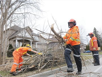 Ice Storm Clean-up