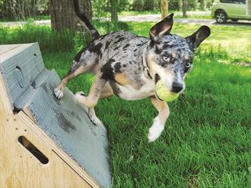 Cobourg Humane Society Dogs