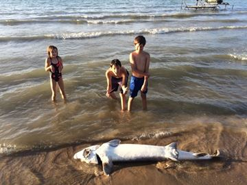 Six-foot sturgeon washes up on Wasaga Beach shore
