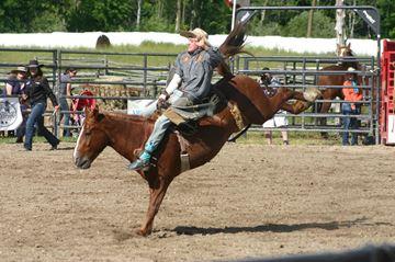 Holstein Rodeo