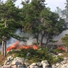 Controlled fire helps protect rare Thousand Islands trees