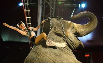 The Shrine Circus