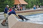 Toronto Star's View: Don't delay in new rules for safety of captive marine mammals
