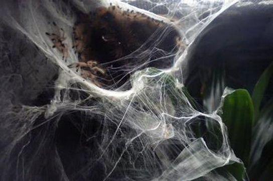 Pets Strands Of Silk Blogger Marina Carletti Tells The Story Of How She Became A Spider Mom To 173 Tarantulas Toronto Com
