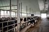 Dairy dispute