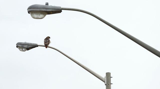Halton Region Making The Switch To Led Streetlights