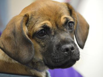 Show Us Your Heart fundraiser helps out Oakville humane society