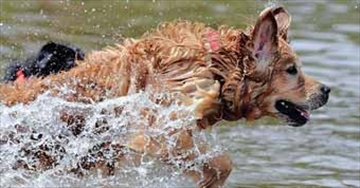 Dock diving dogs introductory afternoon planned for Sunday– Image 1
