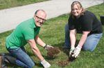 Siemens tree planting