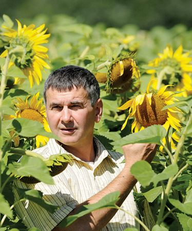Local flowers blossom into Barrie sunflower oil biz
