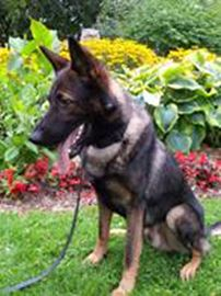 Kawartha Lakes Police Service's new canine officer