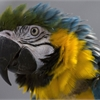 Parrots seek new homes as sanctuary closure looms
