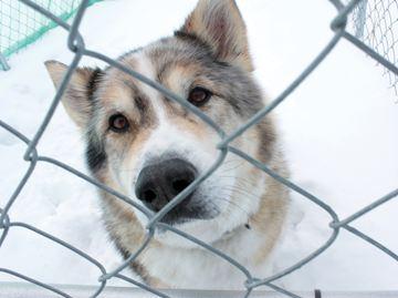 Alliston Humane Society Dogs For Adoption