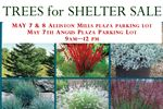 Trees for Shelter sale